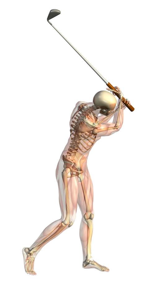 Anatomy of golf swing